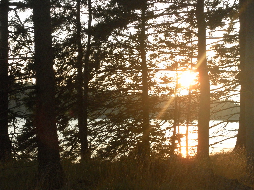 Through the Breezy Trees