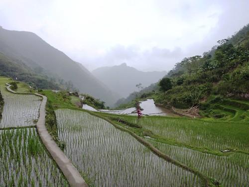 Luzon-Bangaan (89)