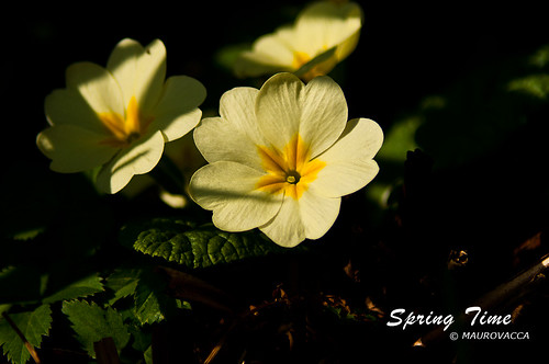SpringTime V by maurovacca