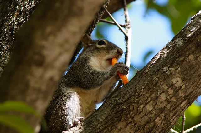 Flora & Fauna / Ardilla y Cheetos -- | Flickr - Photo Sharing!