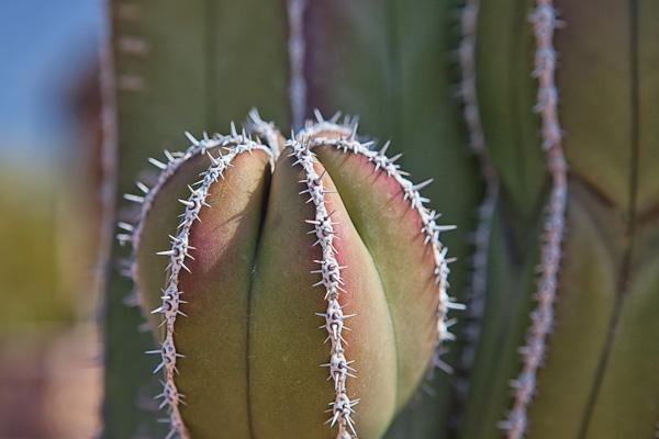 Cactus Sprout!