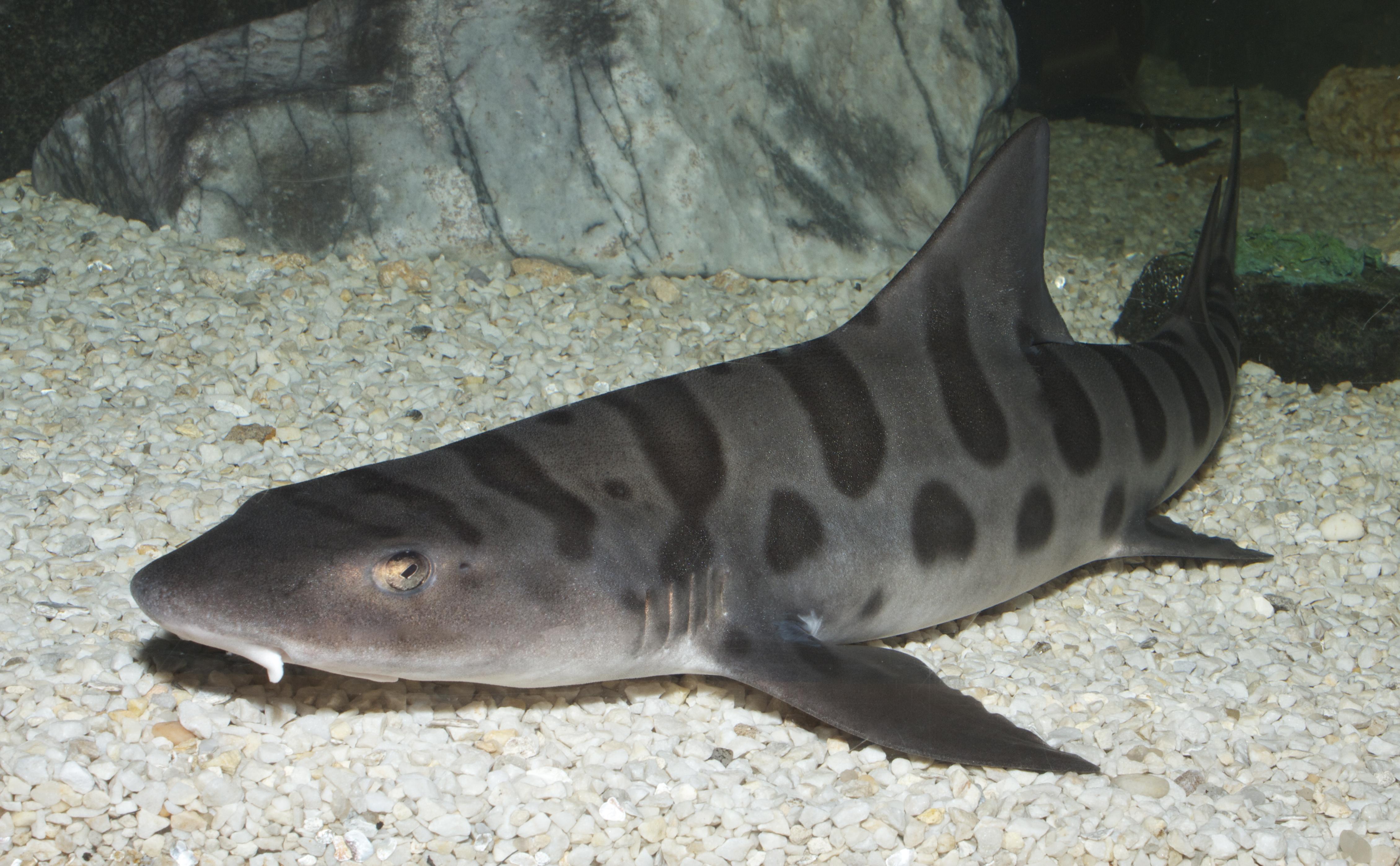 Pet Shark Aquarium