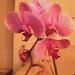 2012-03 orkideak-10