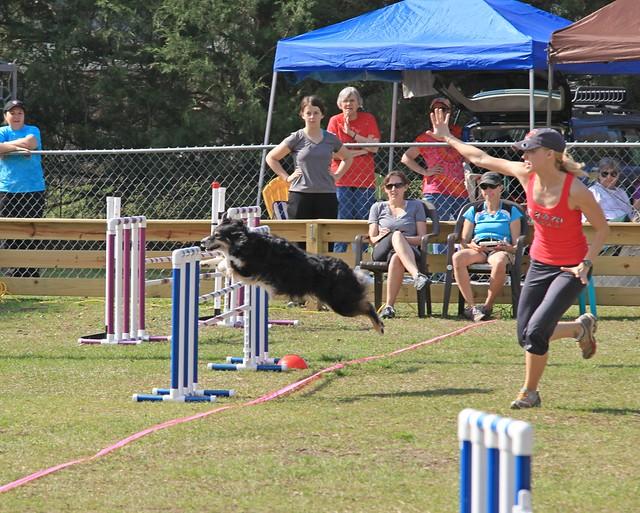 Charleston Dog Show