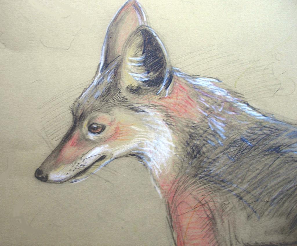 A fox I met