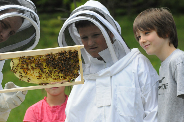 Sharing our bees with the Foss family