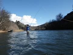 Spey cast on classic Klamath River steelhead glide