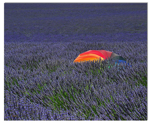 france detail colors umbrella couleurs lavender provence lavande colori francia ombrello provenza parapluie ghostbuster lavanda dettaglio gigi49