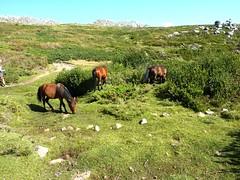 Retour à Bucchinera par le sentier végétal