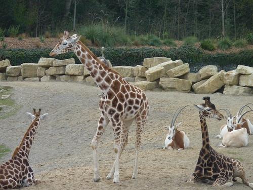 Dublin Zoo photo