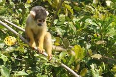 Que mono!