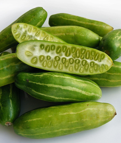 Tindora, Indian cucumber