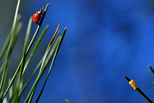 Journey of a Ladybug; to be continued...,