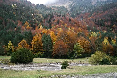 Bosque mixto en otoño