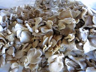 oyster-mushroom.jpg