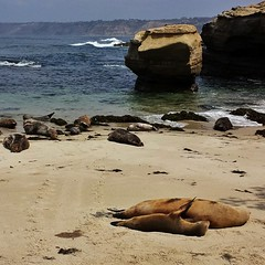 These guys are doing what I wanna be doing. #chillinthemost #beachbums #sealspooning