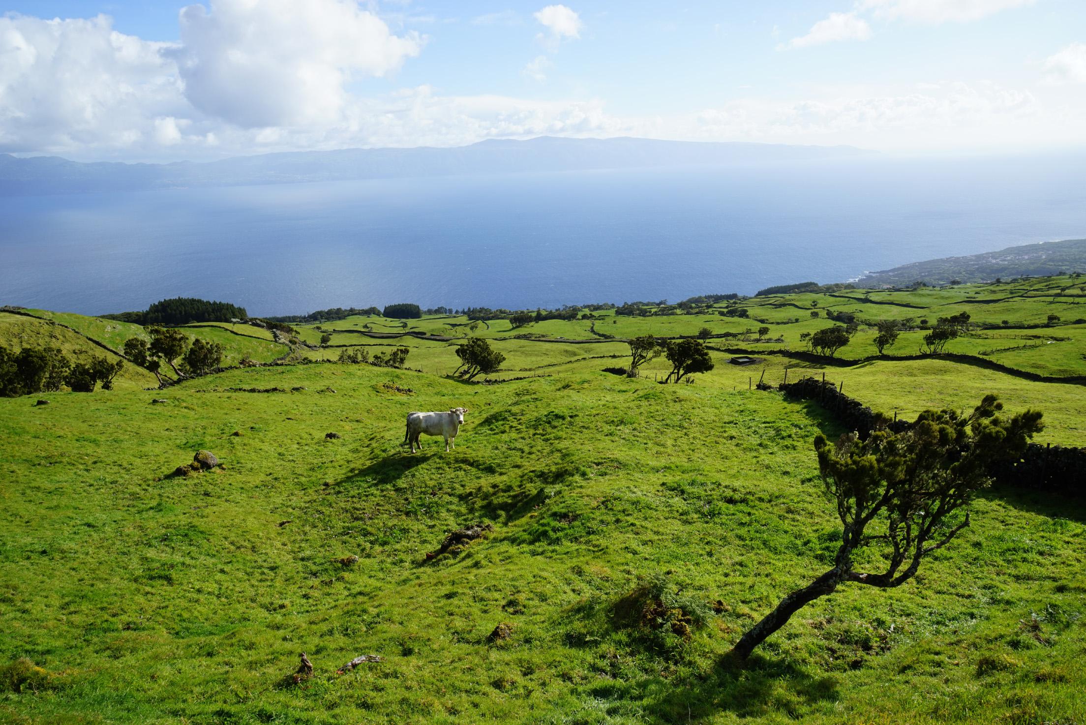 Pico Highlands View to Sao Jorge