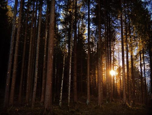 morning sun sunlight nature germany nikon europe rays sunrays neuschwanstein blackforest nikond3200 travelphotography d3200