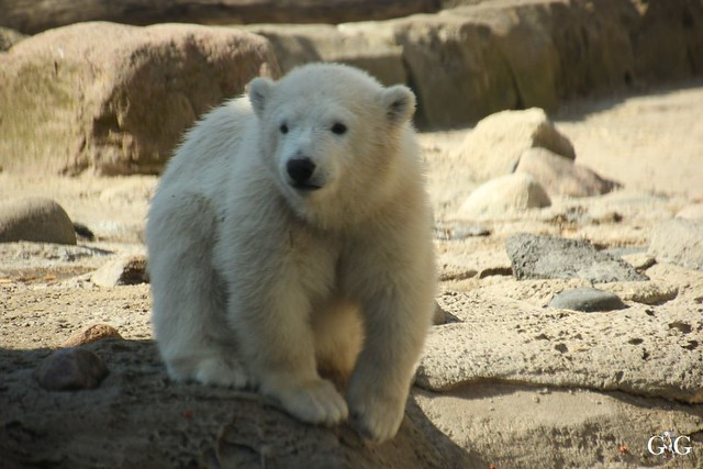 Zoo am Meer 01.05.201699