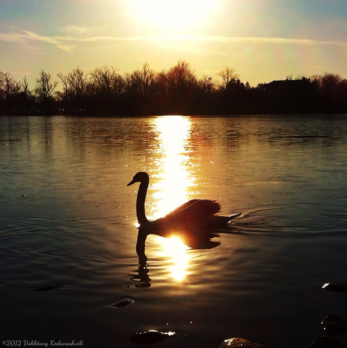 usa sun lake reflection water silhouette square swan indiana notredame iphone iphone4 iphoneography procameraapp iphonesia snapseed vakhography
