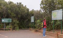 La Gomera - Parque Nacional de Garajonay (3)