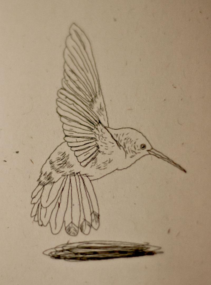 hummingbirdbook-5