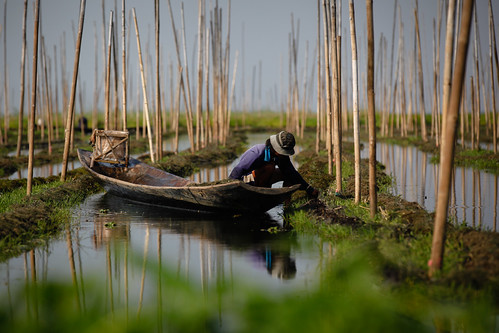 Farming on Inle Lake