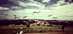 'Birds of Bare Island 1' - 83 of 366   alexkess daily mobile photography project