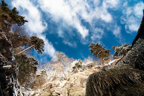 snow tree beach clouds day lookup tokina lowtide seaweeds irvingnaturepark 1116mm