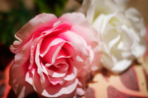 plain-flowers