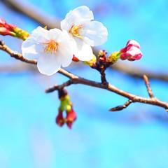 ようやく春になりました♪ by Noël Café