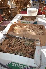 種子房中各式各樣的乾燥種子