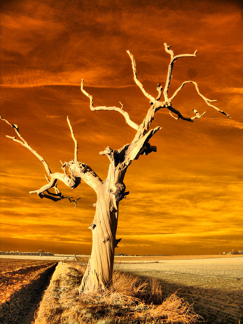Twisted Tree Infrared