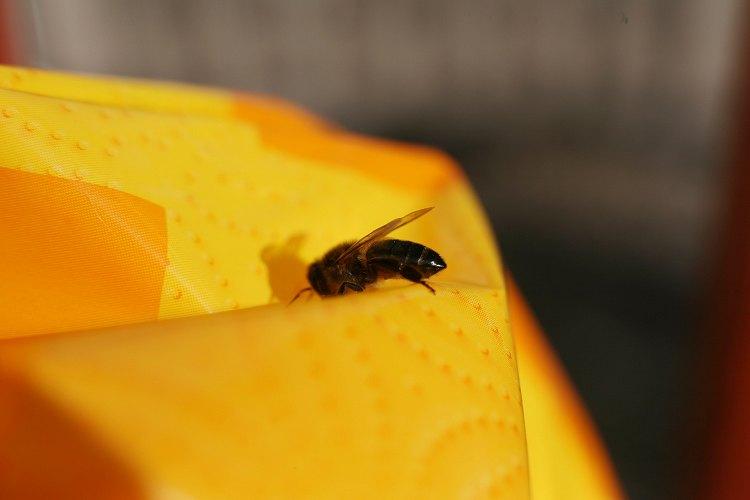 02-23-bee