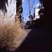 道端の枯れ草