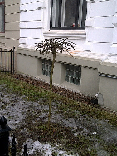 IMG-20120301-01100.jpg by karlakp