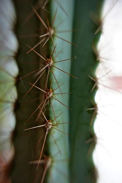 anteketborka_cactus8