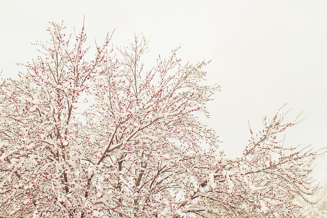 Snow Day - 03/05/12