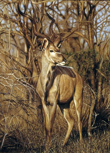 "'Kudu' oil on board 16"" x 12"