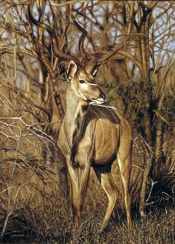 "'Kudu' oil on board 16"" x 12"