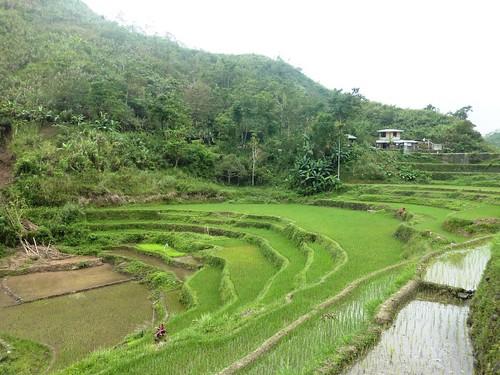 Luzon-Bangaan (88)