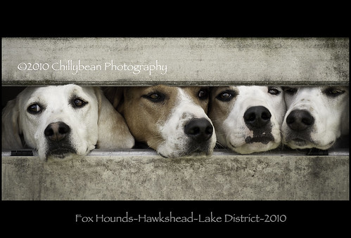 Fox Hounds-Hawkshead-Lake District-2010                             [Explored March 13 #14]