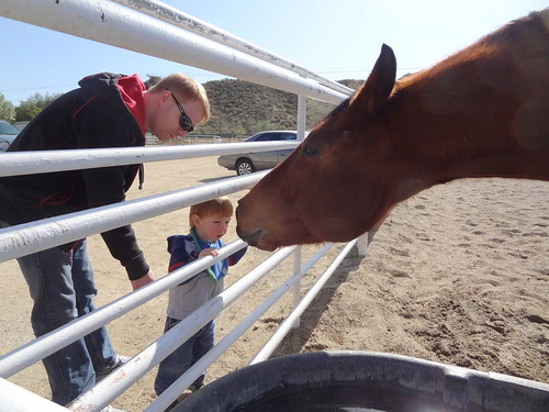 A Horse Saying Hello to Archie and Ben