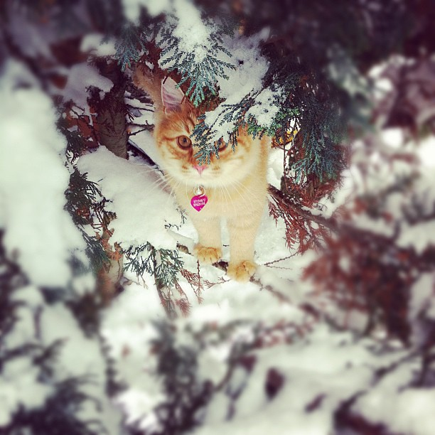 Findus i treet