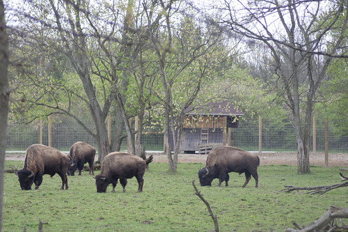 statepark park buffalo state indiana grazing in bluffton quabache