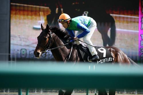 20120324 トーセンホマレボシ / Tosen Homareboshi