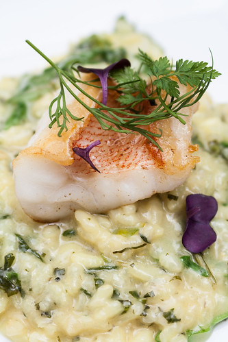 Fish of the Day with Lime Risotto