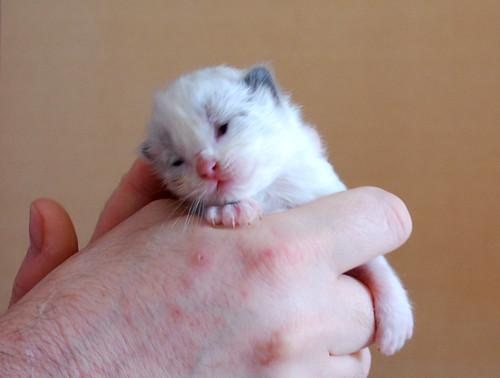 kitten growth