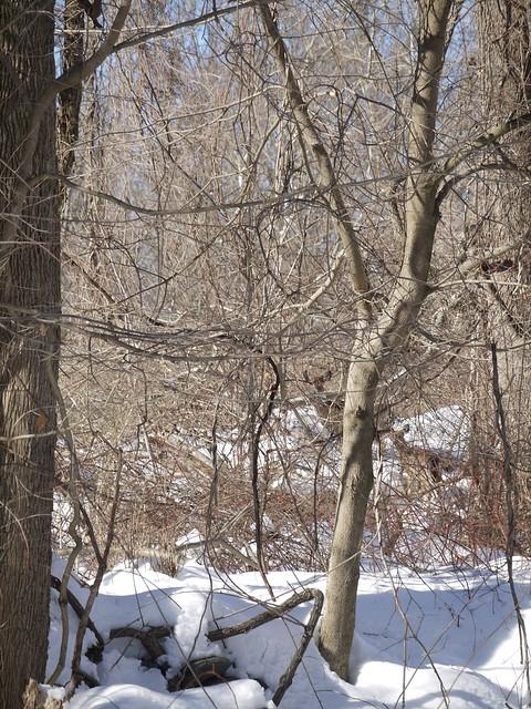 月, 2014-02-17 14:24 - シカの群れ