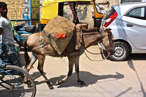 a working mule